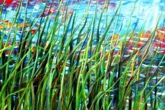 pond-reeds_