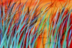 reeds-at-amber-light